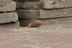 Mortiergranaat-gevonden-bij-nieuwbouwwoningen-Foto-MediaTV