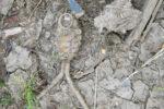 Vancover grenade_1462296303941_4086030_ver1.0_320_180