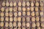 648x415_illustration-vieilles-grenades-datant-premiere-guerre-mondiale