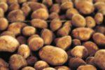 le-sac-de-pommes-de-terre-contenait-une-grenade_4180727_1000x500