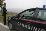 vicobarone ritrovamento cannabis nicelli carabinieri