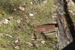 pocisk-mozdzierzowy-375593