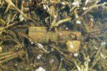 elk-granat-w-wodzie-386046