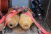 Nach der Entschärfung wurden die beiden Bomben im Auto des Sprengkommandos abtransportiert.