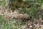 bori-les-munice-granaty-strely-pyrotechnik_denik-630