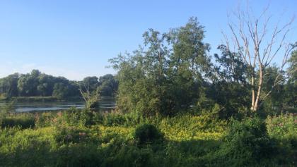 blick-aus-dem-auenwald-auf-die-donau-kurz-vor-der-staustufe-ingolstadt