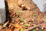 180914 Hand grenade Jaffna Uni ND 1