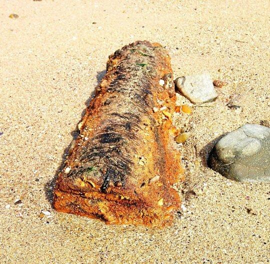 Une des deux bombes retrouvées par le malouin Hervé Delamotte (Photo DR)