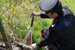 carabinieri-17089.660x368