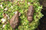 nalez-nevybuchle-munice-z-druhe-svetove-valky-na-tachovsku-foto-f-soukup-04_denik-630-16x9