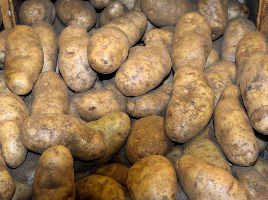 patates-854x639