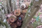 les-huit-obus-empiles-dans-un-arbre-1579786092