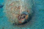 ordigno-bellico-487020.660x368