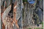 niewybuch-w-drzewie-saperzy-696x515