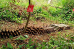 Over 150 UXO's founr in farmland in Veal Veng district, Pursat Province. Mine Action Authority