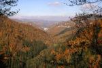 Ritrovato-un-ordigno-bellico-nella-Foresta-della-Lama_articleimage