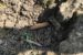 """Nález neznámej munície poèas výkopových prác pri svojom rodinnom dome v obci Pèolinné v okrese Snina telefonicky oznámil na linku 158 v pondelok (21. 9.) 41-roèný muž. TASR o tom informovala hovorkyòa Krajského riadite¾stva Policajného zboru v Prešove Jana Ligdayová.       Muž pod¾a jej slov s muníciou nemanipuloval a jej nález hneï ohlásil. """"Na miesto bola vyslaná policajná hliadka, ktorá miesto zabezpeèila do príchodu krajského pyrotechnika. Ten urèil, že ide o pechotné náboje kalibru 7.92 x 57 milimetrov, asi pä kilogramov a jeden puškový granát SprGr 30 ráže 30 milimetrov,"""" uviedla Ligdayová s tým, že pyrotechnik granát zneškodnil na bezpeènom mieste mimo obce a pechotnú muníciu zaistil. Prešov, 22. septembra 2020. FOTO TASR - KR PZ v Prešove"""