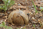 Cluster-bomb-in-ground-CCBY-Mines-Advisory-Group