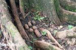 enam-granat-ditemukan-di-taman-raya-bung-hatta